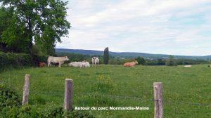 Normandie-Maine 01